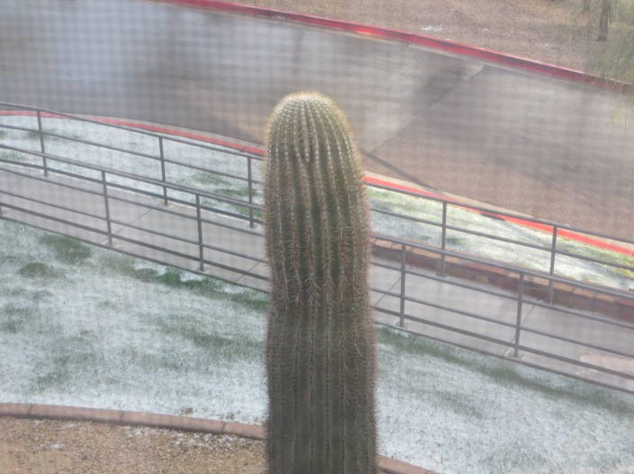 Snow on the Saguaro